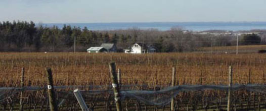 beamsville vineyard