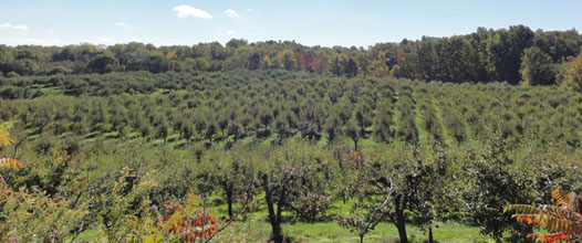 fonthill apple farm